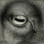 Eye Of The Beholder (2013) graphite on paper, 4 x 4 inches